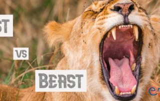 Englisch lernen Falsche Freunde Biest Beast